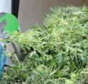 Wederom wietplantage in woning blootgelegd