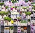 Medewerker Bloemenveiling verduisterde 4,3 miljoen euro