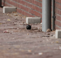 Raadsels rond vondst handgranaat op straat