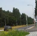 'Populieren aan Bovenkerkerweg vormen gevaar: kap noodzakelijk'