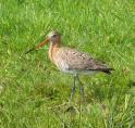 Provincie verkoopt vogelwalhalla 'Landje van Geijsel' bij Ouderkerk