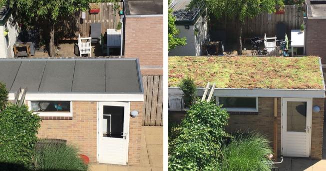 Amstelveense 'stormloop' op subsidieregeling 'Groen op gebouwen'