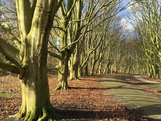 Amsterdamse Bos bestrijdt zwerfafval met speciale wandelstok