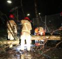 Brandweer werkt stug door in Amstelveen: zoveelste boom omver