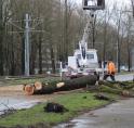 Bomen langs Beneluxbaan zorgen voor problemen