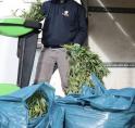 Wietplantage in Westwijkse woning ontmanteld