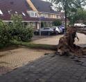 Ruim 200 bomen gesneuveld tijdens stormnacht begin juni