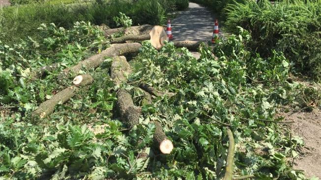 Gemeente vervangt zieke en oude straatbomen