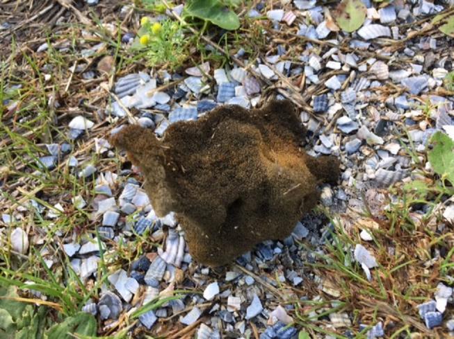 Hondeneigenaren opgelet: 'Gebakken spons aangetroffen'