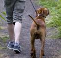 Amsterdamse bos breidt hondenverbod uit