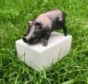 '3D-miniatuur Zwijntjes' tijdelijk te koop in Stadshart Amstelveen