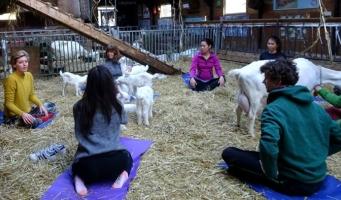 Lammetjes geboren tijdens geitenyoga in Amsterdamse Bos