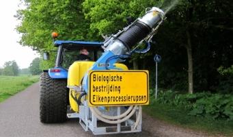 Pas op voor eikenprocessierupsen in Amsterdamse Bos