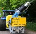 Waarschuwing voor eikenprocessierups in Amsterdamse Bos