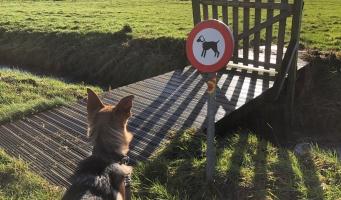 'De hond is geen melkkoe, afschaffen die hondenbelasting'
