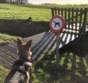Broedseizoen: verscherpte controle op loslopende honden