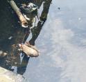 Zorgen om slechte waterkwaliteit in Amstelveen