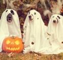 KNGF komt weer met spectaculaire Halloween Hondentocht in Amsterdamse bos