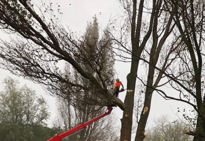 Verkeershinder door bomenkap op Beneluxbaan
