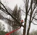 Ouderkerk strijdt voor compensatie van kap 10.000-14.000 bomen en struiken langs A9