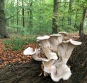 Amsterdamse bos uitgeroepen tot 'Best day out'