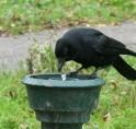 Vier waterfonteintjes staan tijdelijk droog