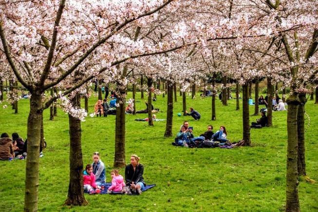 Mooi weer tijdens opening Cherry Blossom Festival