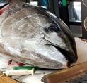 Enorme blauwvin tonijn baart opzien in Stadshart Amstelveen