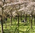 Aanplant bamboe en rododendrons Bloesempark