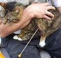 Kat met pijl beschoten in Waardhuizen