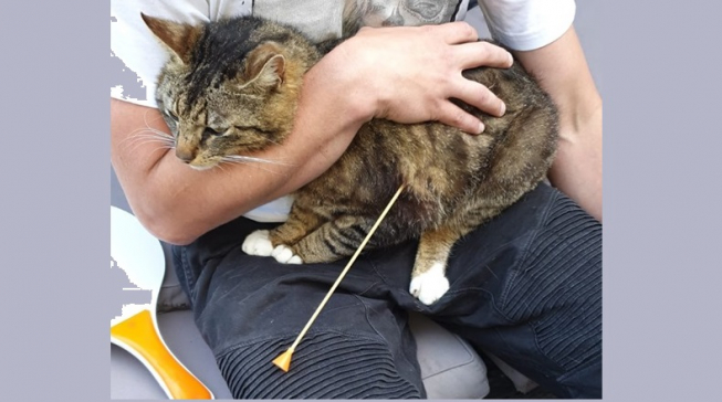 Kat overleeft aanslag met blaaspijp-pijl